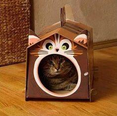 Casinha de gato com caixa de papelão.