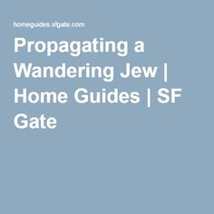 Propagating a Wandering Jew | Home Guides | SF Gate