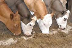 Ten Ways to Cut Cattle Feeding Costs.