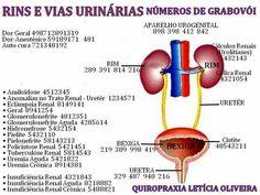 Rins e vias urinarias