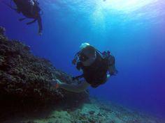 http://rainbowscuba.com/hawaii-scuba-diving-reservations.html @rainbowscuba