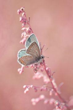 and butterflies. ♥ #NaturalBeautyDesertEssence