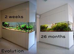 liter layout by Monsieur Oliver Knott Aquarium Stand, Marine Aquarium, Aquarium Fish Tank, Planted Aquarium, Fish Tank Wall, Fish Tank Design, Amazing Aquariums, Tropical Fish Tanks, Aquarium Backgrounds