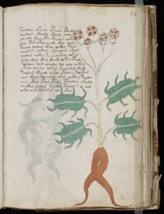 The Unread: The Mystery of the Voynich Manuscript - The New Yorker Voynich Manuscript, Medieval Manuscript, Illuminated Letters, Illuminated Manuscript, Ancient Paper, Masonic Symbols, Paper News, Historical Artifacts, Book Of Hours