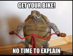 For more great pics, follow www.bikeengines.com - #turtle #bike #bicycle #meme #funny