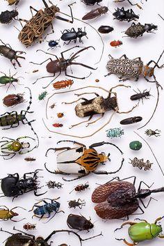 Beetles part 3