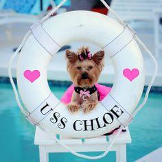 Chloe is ready to sail the high seas! :)