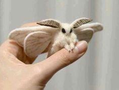 Venezuela Poodle Moth | CUTE: Venezuelan Poodle Moths Are AWWdorable!