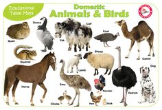 domestic animals.jpg (1032×700)