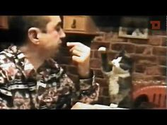 Cat and Sign Language - YouTube Cat Signs for Food