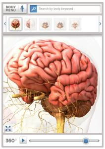 "FREE How It Works Videos~ Learn more about the workings of the brain, eye, heart, and more!// Prairie Primmer ""All About the Human Body"". Science Lessons, Science For Kids, Science Activities, Life Science, Science Ideas, Human Body Science, Human Body Unit, Apologia Anatomy, Body Map"