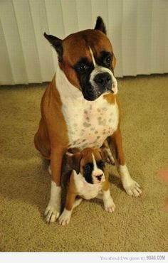 Father-son #boxers <3 <3 <3