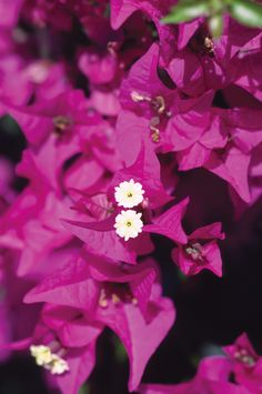 #Flowers Increase Your Followers On Pinterest http://www.ninjapinner.com/idevaffiliate/idevaffiliate.php?id=212