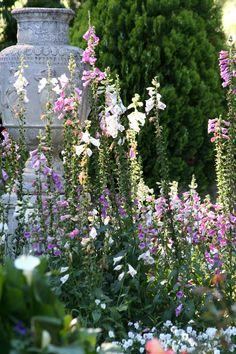 A view across the lavendar garden