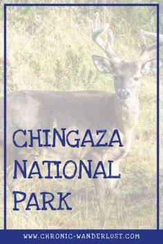 Chingaza | National Park | Colombia | outdoor | Hiking | Venado | Deer