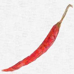 DE ARBOL Hot Pepper Seeds - 10 seeds - Chilli Pepper Seeds #hotpepperseeds #hotpeppers #seeds #hotpepper #peppers