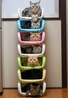 Invest in Color-Coordinated Cat Stacks - 15 Clever Ways to Organize Your Cats