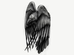Raven+tattoos | Free designs - Raven with shrinked wings tattoo wallpaper