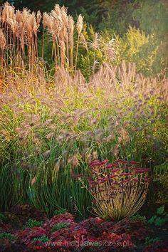 21 10 2014 wizyta Magdy Wasiczek w czasie kwitnienia traw w Arboretum Trojanów Marzena Bąkowska