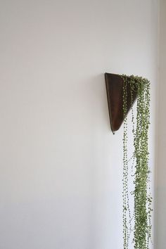 hanging plant in wall-mounted pot string of pearls