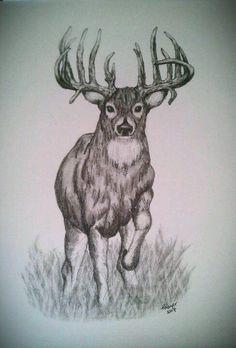 200 Best Deer Sketches Images Deer Sketch Deer Sketches