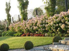 Ogród wśród pól i wiatrów - strona 619 - Forum ogrodnicze - Ogrodowisko