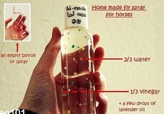 How to make home made fly spray for horses- I think this is what Laurie makes for the horses at the barn. It works pretty good!