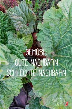 Gemüse: Tabellarische Übersicht der guten und schlechten Nachbarn für die Anpflanzung im Garten
