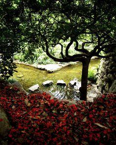 Zilker Botanic Garden, Austin, TX