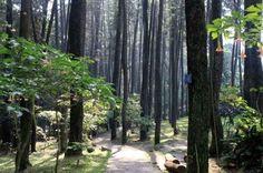 Taman Hutan Raya Djuanda Dago Pakar Bandung