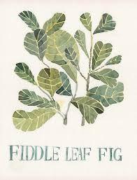 leaf fig tree - Recherche Google