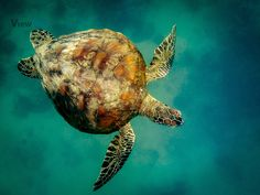 Water Worlds Photo Contest Finalists #photographytalk #amazingphotographs