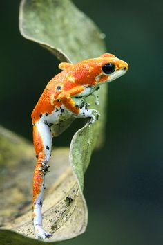 Frog find