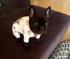 jammies!!! Limited Edition French Bulldog Tee