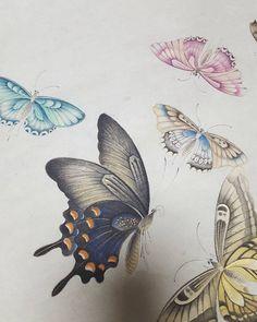 ㅡㅡㅡㅡㅡㅡㅡ양평민화반 수업중입니다. 나비에 열공중인..수강생분들.. #민화#나비#채색화#장식적#동양화#art#koreanart #문선영민화교실#샤랄라 Butterfly Painting, Butterfly Watercolor, Butterfly Art, Korean Painting, Chinese Painting, Botanical Drawings, Botanical Art, Most Beautiful Butterfly, Geisha Art