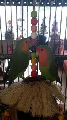 Kibo & crokie