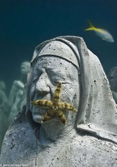 A statue in Isla Mujeres' Underwater Museum, being colonized by a sea star.