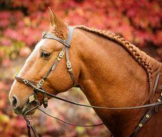 Frederiksborg stallion, Moravita's Bariton.