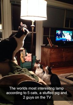 Tagged with funny, cat, memes, cats, dump; A dump of cats. Funny Animal Pictures, Funny Images, Funny Photos, Best Funny Pictures, Animal Pics, Pet Photos, Funny Animal Memes, Funny Animals, Cute Animals