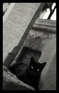 Spooktober Special: Cats Hanging Out In Graveyards Black Cat Aesthetic, Pet Cemetery, Pet Memorials, Cat Memes, Cat Art, Hanging Out, Animal Pictures, Cat Lovers, Cute Animals