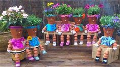 pot-family