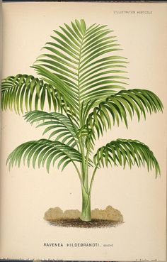n200_w1150 by BioDivLibrary, via Flickr