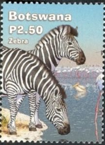 Burchell's Zebra (Equus burchelli)