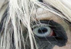 2012-03-impulsion-04-la-cavaliere-masquee
