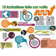 Afrikaanse taakhulp: Voëls. Feite. Infografika. Oudste. Swaarste. Vinnigste. Stinkste. Vinnigste swemende voël. Grootste vlerkspan. Grootste oog. Enigste neusgate op snawel. Hardste. Diere. Animals. Birds. Hoezit!