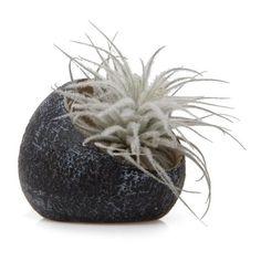Koski Terrarium Plant Pot (11 CAD) ❤ liked on Polyvore featuring home, home decor, floral decor, succulent terrarium, succulent plant terrarium and succulent plant pots