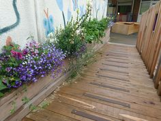 We built this planter as part of a new access ramp at St Bernadette's Primary School, the flowers are looking lovely after a bit of a downpour!