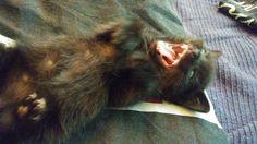 roar, dangerous!