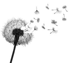 flower tattoo images | Dandelions are delicate flowers that are easily dishevelled by the ...