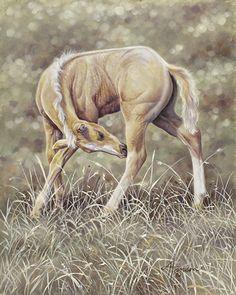 "Stretch - horse painting by Ann Hanson Oil ~ 10"" x 8"""